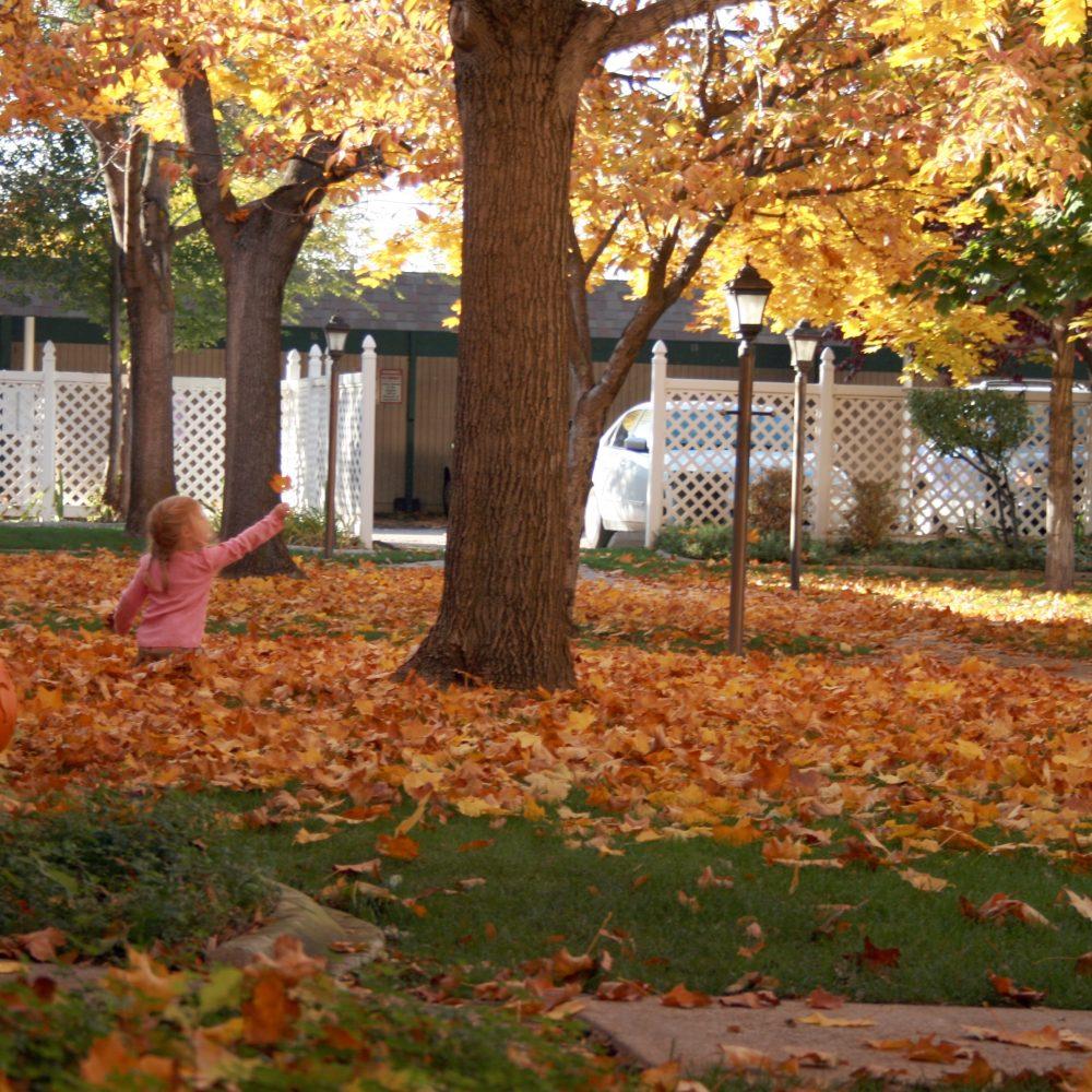 autumn-autumn-colours-autumn-leaves-695282