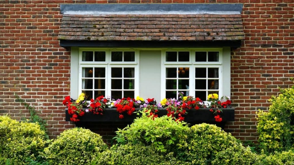 Home windows with high shrubs and flowers.